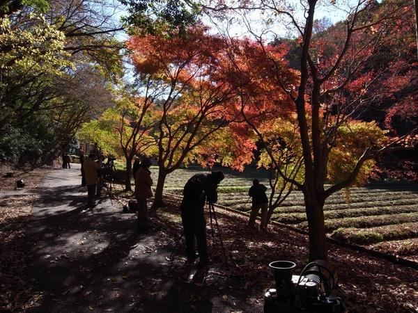 泉自然公園の紅葉