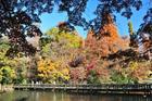 井の頭公園池PL&24-1.8