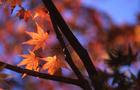 泉自然公園の紅葉 2