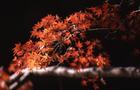 泉自然公園の紅葉 3