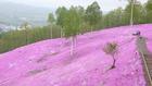 北海道の花 10